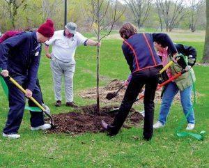 Удобрение плодовых деревьев