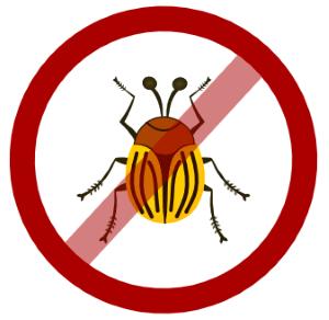 Боремся с колорадским жуком с помощью уксуса