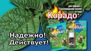 Как действует препарат Корадо от колорадского жука?