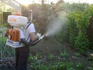 Борьба со слизнями в саду