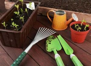 Дезинфекция садовых инструментов от нематоды