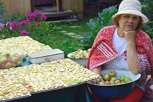 Как вялить яблоки на солнце?