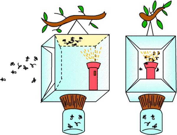 Ловушка для майского жука