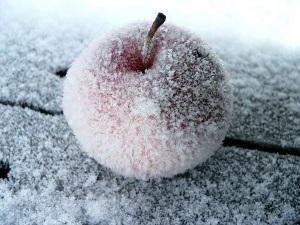 Можно ли морозить фрукты целиком?