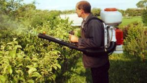 Чем опрыскивать растения, которых поразила тля?