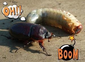 Средства борьбы с майским жуком