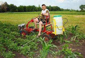 Как проводить опрыскивание картофеля от колорадского жука?
