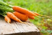 Как собирать морковь осенью?