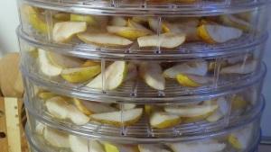 Правила сушки груш в сушилке