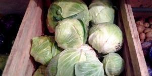 Способы сбережения капусты в подвале