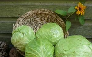 Особенности хранения капусты