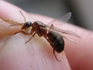 Муравей насекомое почему так