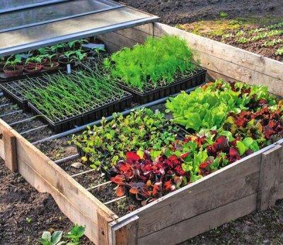 Выращивание рассады в парнике