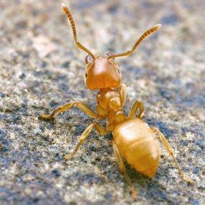 Как предотвратить появление муравьев
