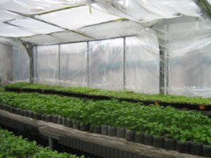 Как ухаживать за рассадой в теплице