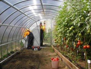 Теплицы для выращивания овощей