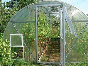 Как оборудовать теплицу для выращивания томатов?