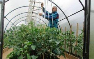 Особенности ухода за овощами в теплице в зимний период