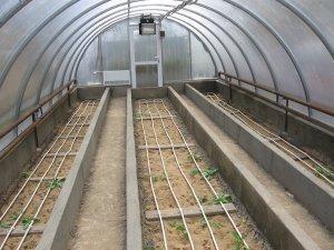 Как оборудовать теплицу для зимней посадки овощей?