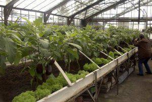 Требования к теплице для выращивания баклажанов