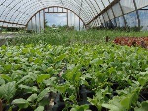 Требование к теплице при выращивании редиса