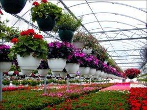 Бизнес на выращивании цветов