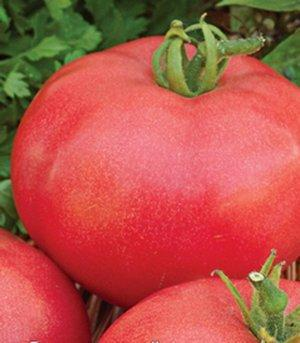 К каким болезням устойчив томат Кукла Маша?