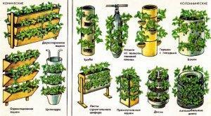 Суть голландской технологии выращивания клубники в теплице
