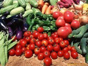 Какие овощи выбрать для бизнеса по выращиванию их в теплице?
