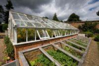 Бизнес по выращиванию овощей в теплице