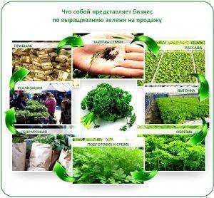Плюсы и минусы бизнеса на зелени