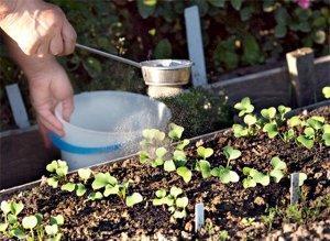 Оптимальные условия для высадки редиса в теплицу