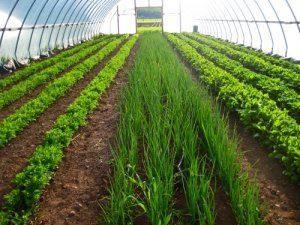 Рентабильность безнеса на выращивании зелени