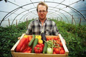 Как расчитать рентабельность бизнеса по разведению томатов