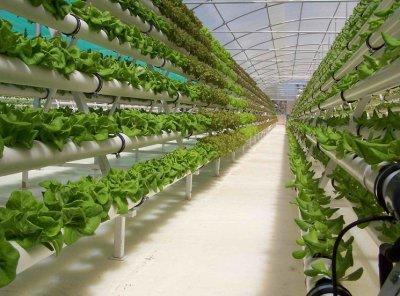 Как выращивать огурцы в теплице зимой