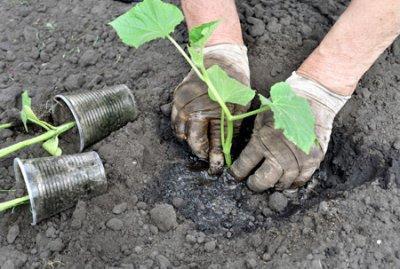 Емкости и почва