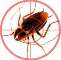 как избавится от тараканов в доме самый эффективный способ