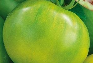 Зелёный гостек на вашем огороде -томат Антоновка Медовая. Подробное воссоздание  со фотографиями