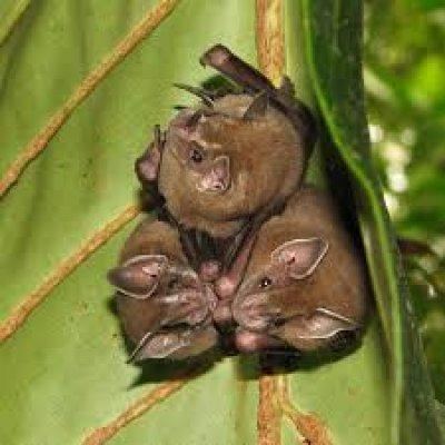 Ареал обитания летучих мышей