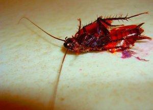 Действие на тараканов
