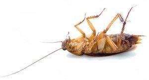 Как избавиться от тараканов в доме? Самые эффективные способы