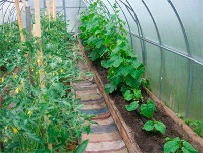 Делим жилплощадь: выращивание огурцов и помидоров в одной теплице