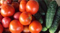 Соседство культур в теплице: помидоры и огурцы