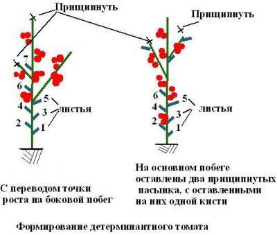 Особенности формирования разных сортов томатов