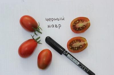 томат мавр