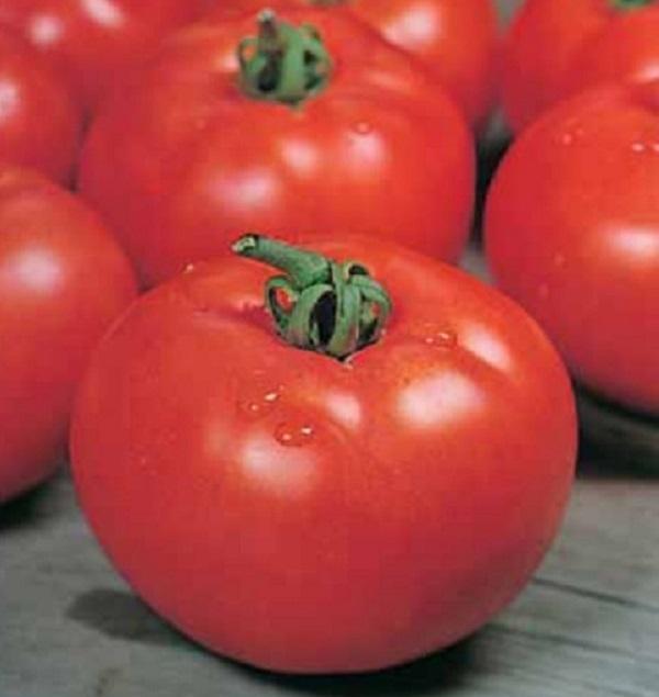 томат розмарин фунтовый отзывы