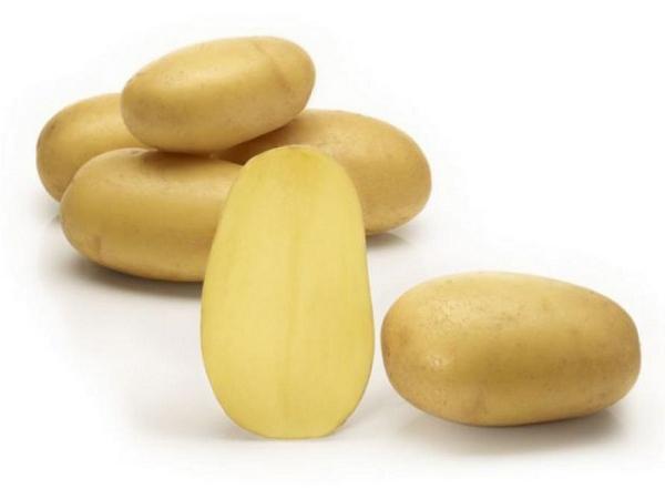 """картофель """"Королева Анна"""""""