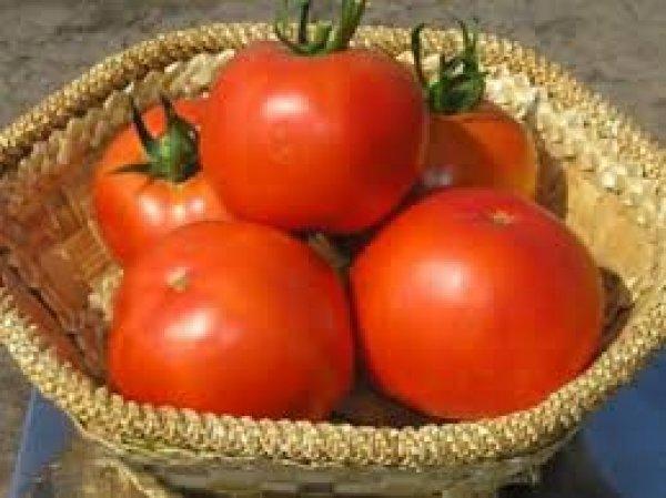 tomat_ajur