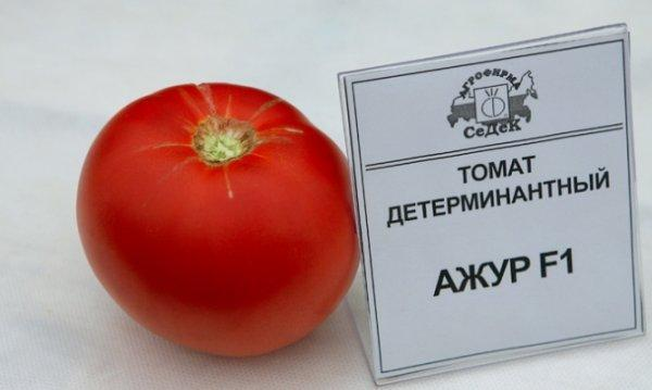 tomat_ajur_3