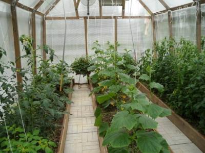 Что выращивать в теплице?